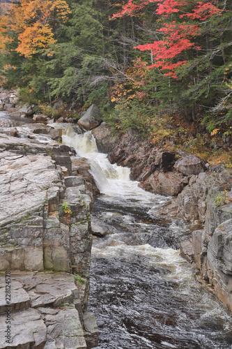 Piękni spadków kolory i fauna Biały Halny las państwowy w New Hampshire, usa