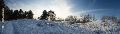 landscape of winter pine forest, a lot of snow - 228125503