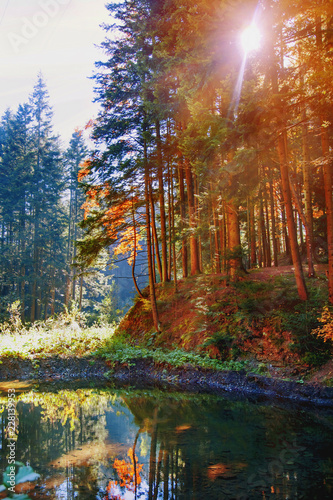 Foto Murales Fantastic forest with mountain river in the sunlight. Sun beams through tree. Dramatic colorful scenery.
