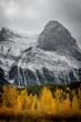 Fall in Canmore, Alberta
