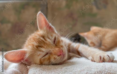 Cute red kitten sleeping on blanket.