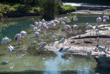 flamingo community