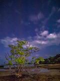 Tree Sea With Night Sky View