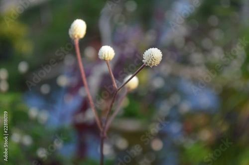 Flower in Garden - 228180119