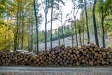 Gefällte und markierte Baumstämme im Wald - 228193181