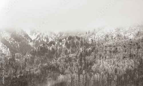 View on winter mountains with forest. Image in black and white color style.