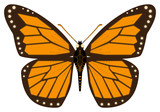 robotic butterfly   illustration