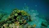 Giant clam, corals and fishes underwater tropics. - 228228942