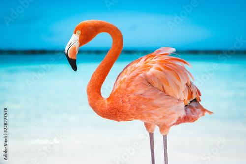 fenicottero rosa - 228277570
