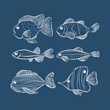 set of different fishes