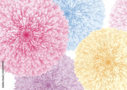 Kolorowi kwiaty na białej tło wektoru ilustraci