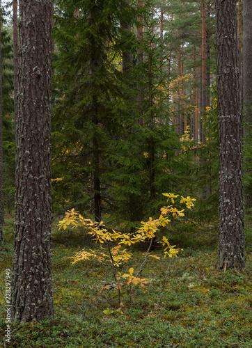 Grunge forest landscape in autumn - 228297949