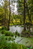 Bagno w lesie