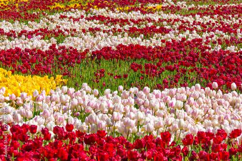 Hermoso jardín de flores