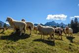 Schafe auf dem Kranzberg in Mittenwald, Bayern - 228328595