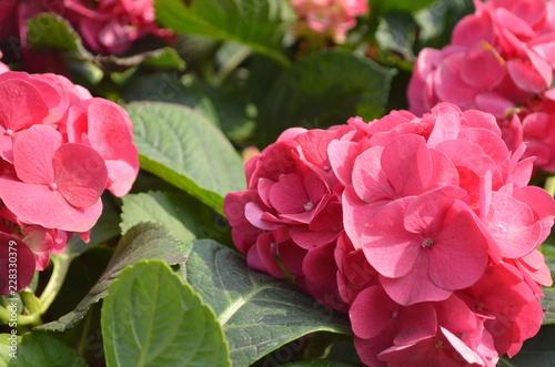 Flower in Garden - 228330379