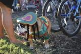 Rasta bulldog in hallowen costume