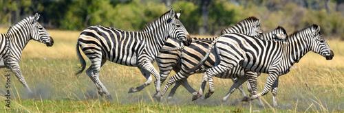 Zebras - 228352134
