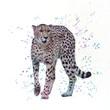 Cheetah. Digital watercolor painting.
