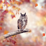 Great Horned Owl in the autumn woods - 228364385