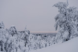 Trees covered by snow at the top of Ruka Hill. Finland - 228389946
