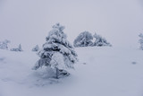 Trees covered by snow at the top of Ruka Hill. Finland - 228389976