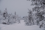 Trees covered by snow at the top of Ruka Hill. Finland - 228389996