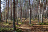 Beautiful Karelian forest landscape in early autumn in Russia