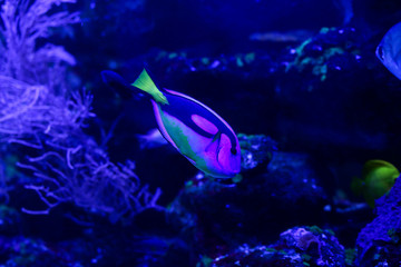 Beautiful colored fish in the water. Underwater world