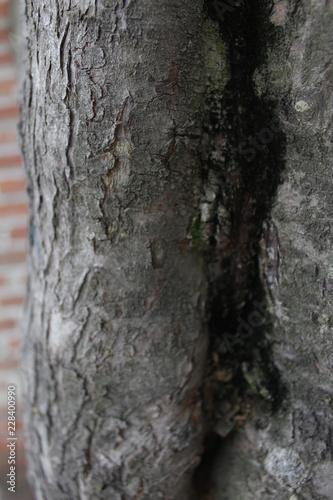 tronco de arbol  - 228400990