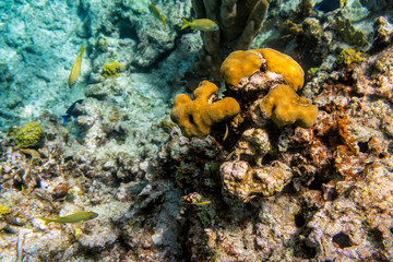 Coral reef. Underwater life. Selective focus
