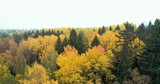 Forward moving aerial tracking shot over tress in Autumn. - 228426713