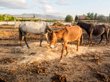 Horse on a farm