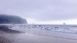 Colony of seagulls at a beach near Cap Meares, Tillamook, Oregon - 228448130