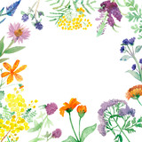 Watercolor composition isolated healing plants on white background - 228474725