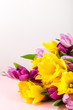 Beautiful Bunch of Tulips and yellow Daffodils on the Pink Backg