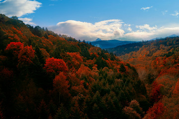 beautiful autumn season leaves color change in hokkaido japan