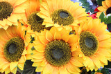background of sunflowers composition