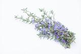 ローズマリーの花 - 228504757