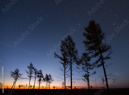 Autumn larches under starry sky at sunrise