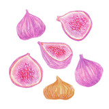 A set of figs painted with colored pencils isolated on a white background. Whole fruits and slices in a cut. Food illustration. - 228511900