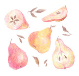 A set of pear painted with colored pencils on a white background. Whole fruits, leaves and slices in a cut. Food illustration. - 228511988