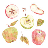 A set of apples painted with colored pencils on a white background. Whole fruits, slices in a cut, seeds and leaves. Food illustration. - 228512316