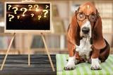Dog. - 228512351