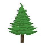 Tree pine cartoon