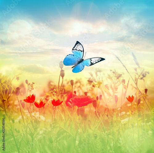Beautiful butterfly and nice flowers. Summer landscape
