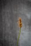 urban flower