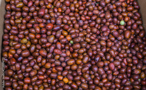 Fresh, brown dates collected from palm trees in Montenegro - 228574712