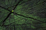 bright fantastic texture of an old wooden surface covered with dark cracks and green moss background for design