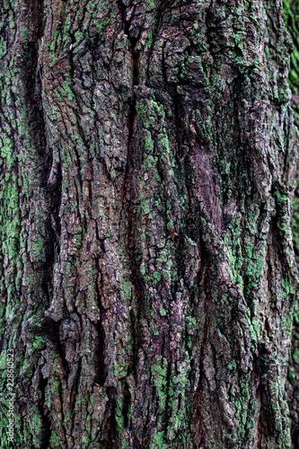 moss on tree trunk - 228610523
